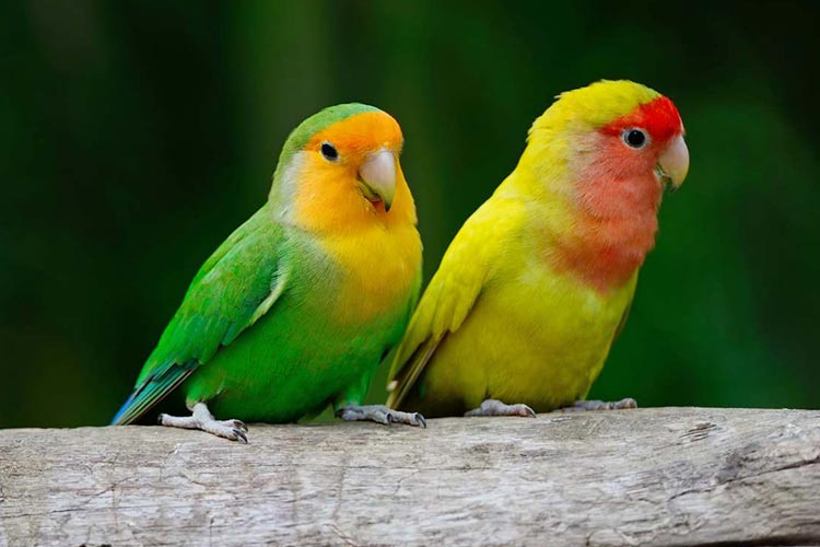 the lovebirds - photo #32