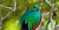 All about quetzal
